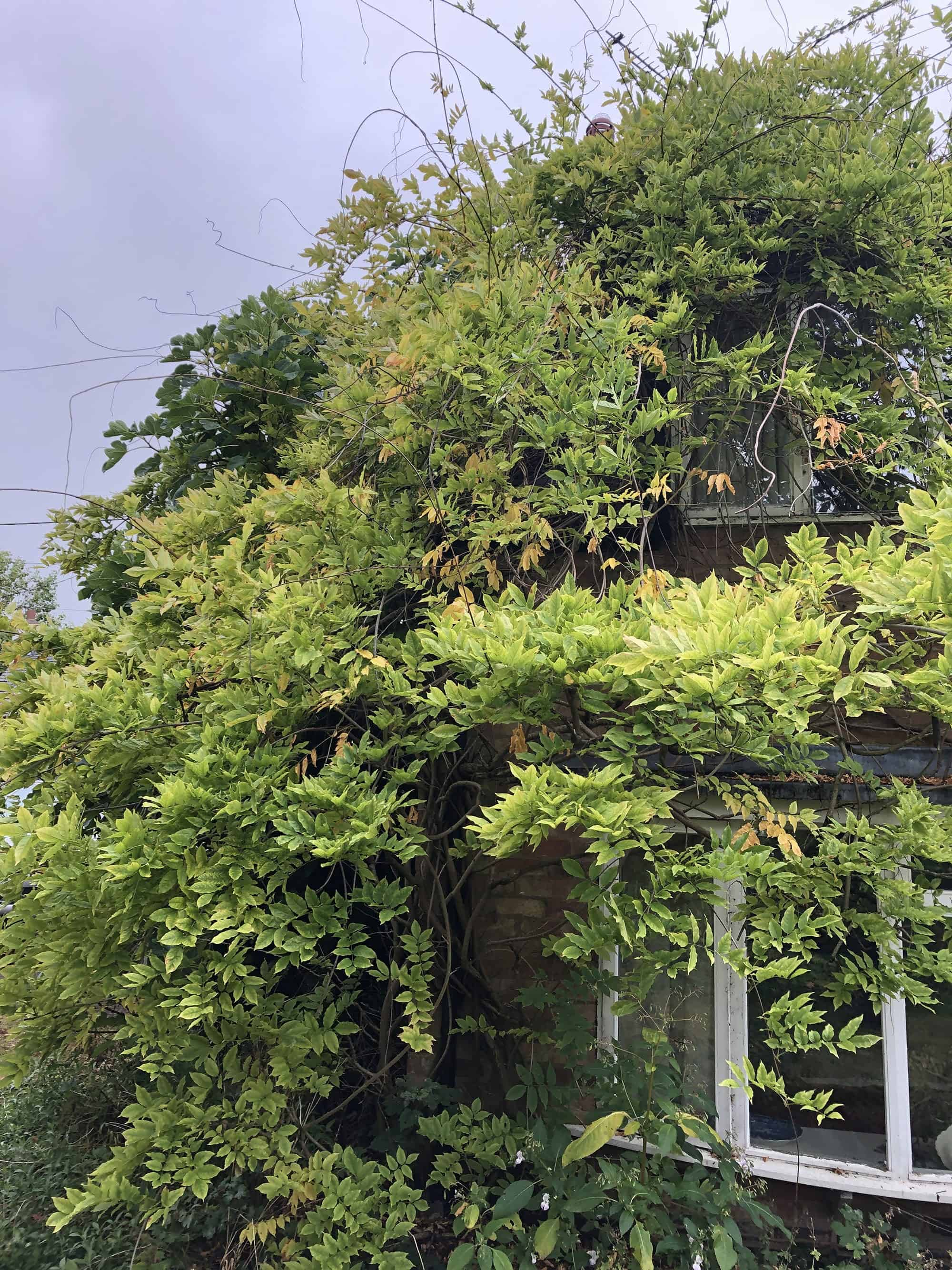 Tree and Vine Removal Rugby